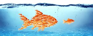goldfish brian blog